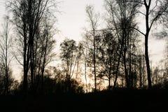 Backlight Forest During Fall Season Stock Afbeeldingen