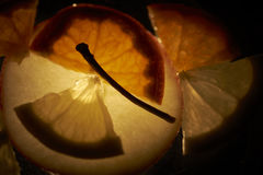 Backlight fruit Stock Image