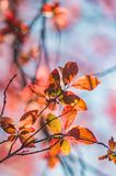 Backlight Leafs Royalty Free Stock Image