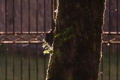 Backlight and rain on a tree, Jura France Royalty Free Stock Image