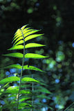 Plants & Tree 1. Backlight shot to show plant beautiful shape royalty free stock images