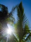 The backlight of the sun shining through tropical trees royalty free stock photography