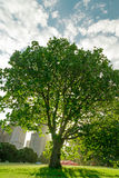 Backlight Tree. Under cloudy blue sky Stock Photo