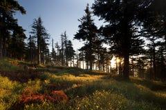 Backlight w jesień lesie Obraz Stock