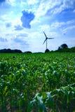 Backlight wind stock photos