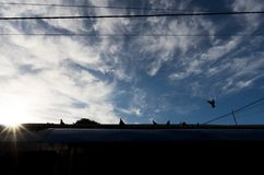 Backlight Zgłębia cienie Gołębie i niebo Uliczna fotografia Obrazy Stock