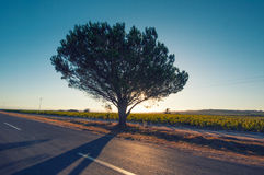 Backlighted tree,south africa Stock Photos