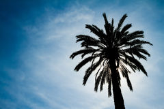 Backlighting Palm Tree Stock Images