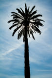 Backlighting Palm Tree. Against a blue sky royalty free stock image