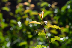 The backlighting of spring leaf Royalty Free Stock Photos