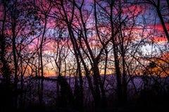 Backligt fantastico di tramonto con il ramo di albero Fotografia Stock Libera da Diritti