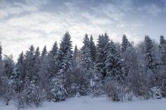 Backlit śnieżny las w zimie obraz stock