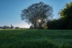 Backlit дерево Стоковое фото RF