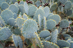 backlit кактус стоковые изображения