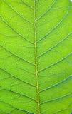 backlit листья Стоковое фото RF