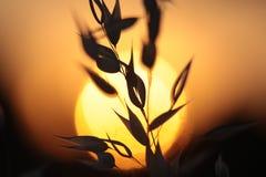 backlit травы стоковые фотографии rf