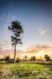 backlit туманнейший восход солнца солнечного света лета ландшафта Стоковая Фотография RF