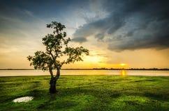 backlit туманнейший восход солнца солнечного света лета ландшафта Стоковые Фотографии RF