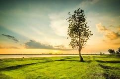 backlit туманнейший восход солнца солнечного света лета ландшафта Стоковое Изображение