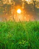 backlit туманнейший восход солнца солнечного света лета ландшафта стоковое фото