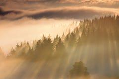 backlit туманнейший восход солнца солнечного света лета ландшафта Стоковые Изображения RF
