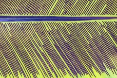 Backlit Achtergrond van de bladstekel Stock Afbeelding