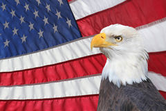 Backlit American Flag with Bald Eagle in Forground. A Backlit American Flag Waving in the Breeze with Eagle in the Forground Stock Image