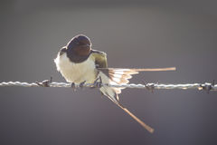 Backlit bird Stock Photo