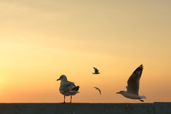 Backlit Bird perches on bridge rail Royalty Free Stock Photo