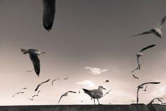 Backlit Bird perches on bridge rail Royalty Free Stock Photos