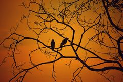 Backlit, Birds, Branches Stock Image