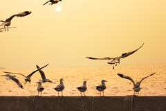 Backlit Birds enjoy a view of sunset Stock Photos