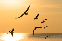 Backlit Birds gliding over the sea at sunset Royalty Free Stock Photos