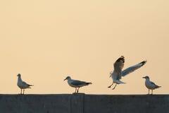 Backlit Birds landing on bridge rail Royalty Free Stock Image