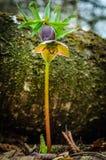 Backlit bloem met een houten achtergrond Stock Afbeeldingen