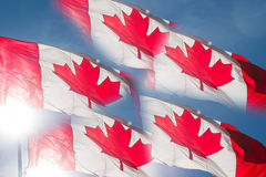 Backlit Canadian Flag Flags Stock Images
