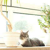 Backlit cat resting next to a window Royalty Free Stock Images