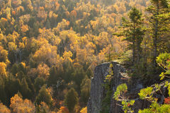 Backlit cliff with pines above trees in fall color on Oberg Moun Royalty Free Stock Photo