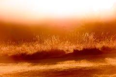 Backlit czerwoni traw ostrza patrzeje bezpośrednio przy słońcem Zdjęcie Stock