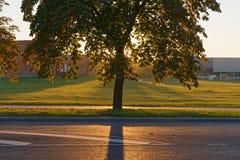 Backlit de herfstboom Stock Afbeeldingen