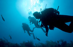 Backlit Divers. Three Backlit Divers in Belize royalty free stock photos