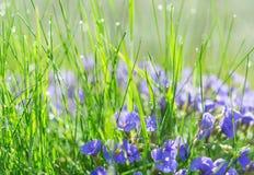 Backlit droplets morning dew on summer sunlit glade Royalty Free Stock Photography