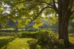 Backlit drzewo zdjęcie royalty free