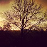 Backlit drzewo Obraz Royalty Free