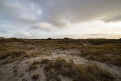 Backlit Dunes on the North Frisian Island Amrum in Germany. Beautiful backlit evening atmosphere of the island of Amrum. Impressive dunes in back light with royalty free stock images