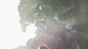 Backlit dust particles. With bubble like bokeh floating in slow motion outdoors in a park against background with green tree branches stock video footage