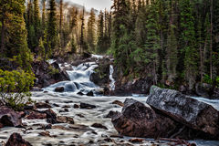 Backlit falls. Light filtering through the trees behind a small waterfall on the Kicking Horse River in Yoho National Park, British Columbia Canada Stock Photo
