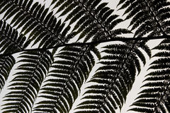 Backlit Fern Royalty Free Stock Photography
