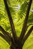 Backlit Fern Stock Image