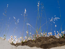Backlit flowers and grasses on a wall in Casares Spain Stock Photography